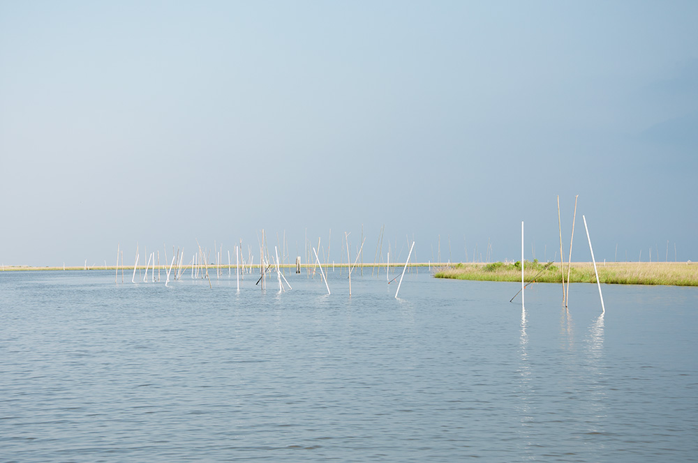 A common coastal Louisiana sight: poles marking oyster beds